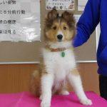 PRO科パートナードッグのご紹介【Dog Trainers】