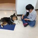 PRO DOG TRAINER科 マットとスティックのトレーニング中です!