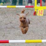 競技会報告!【DogTrainers】