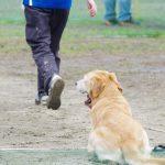 今週末は訓練&アジリティー競技会【DogTrainers】