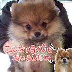 PRO2年生パートナードッグの成長報告【DogTrainers】