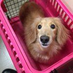 卒業生見参【DogTrainers】