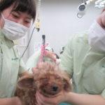 動物衛生看護科~犬の美容実習~