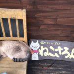 猫サロン実習 ~キャット科~
