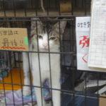 キャット科 アニパル仙台研修( *´艸`)