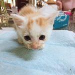 猫サロン店舗実習始まりました!☆キャット科☆