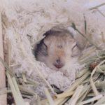 飼育管理科の日常  Vol.2
