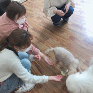 動物看護実習Ⅰ ~保定学~