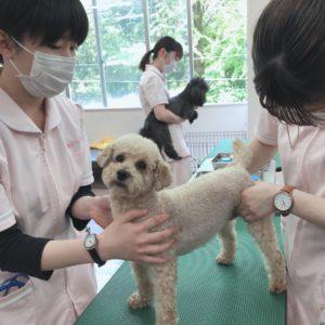 動物看護実習Ⅱ ~血液検査~ 【前編】