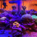 サンゴの「フラッキング」授業