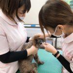 動物看護実習Ⅰ~外耳処置~