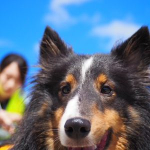 """<span class=""""title"""">Dog SUP(ドッグサップ)②🐕</span>"""